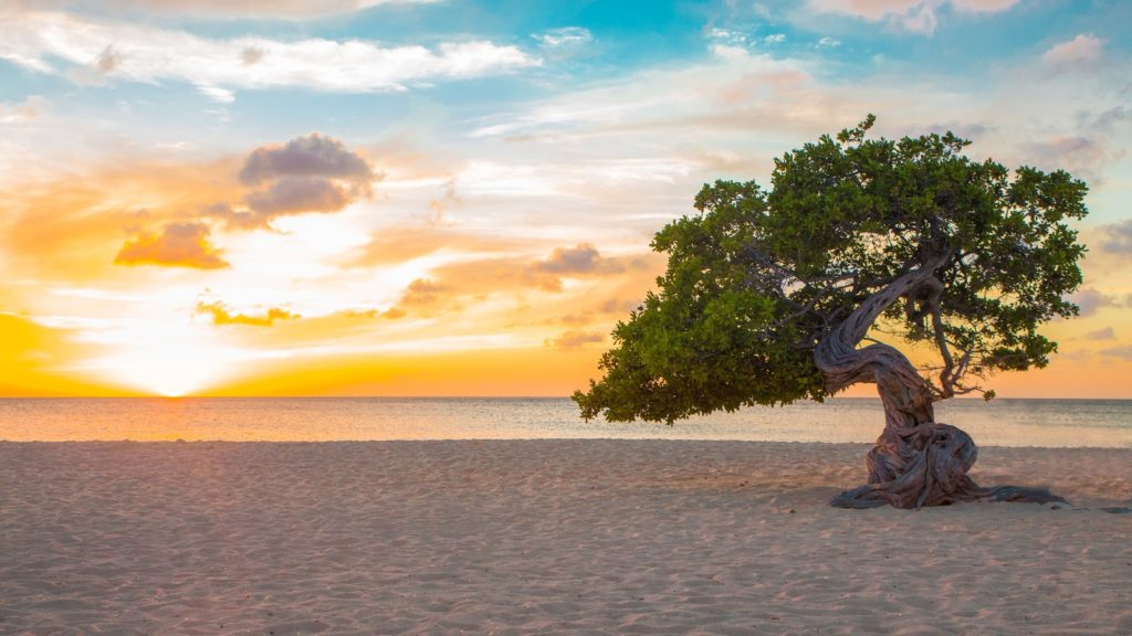 Aruba 2018 Top Incentive Travel Destination to Visit